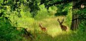 beautiful nature reserve
