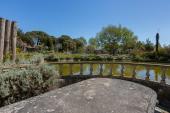 ein großer Teich mit vielen Karpfen