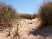 dunes along the coast
