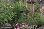 Tuin met veel groenblijvende planten