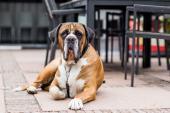 Auch Ihr Hund ist willkommen auf der Veluwe