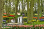 Flowers in the Keukenhof